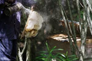 Successful harvest of honey