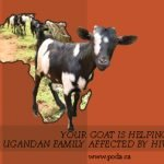 Your Goat is Helping a Ugandan Family Affected by HIV